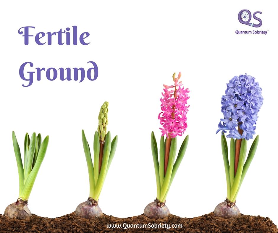 https://quantumsobriety.com/fertile-ground/