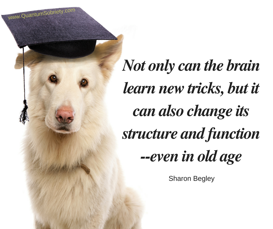 https://quantumsobriety.com/this-dog-can-learn-new-tricks/